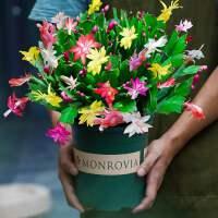 蟹爪兰盆栽带花苞带盆多色花苗绿植物室内四季开花卉好养螃蟹抓莲