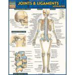 【预订】Joints & Ligaments Advanced