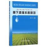 膜下滴灌水稻栽培