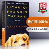 华研原版 我在雨中等你 英文原版小说 The Art of Racing in the Rain 正版进口英语书 全英