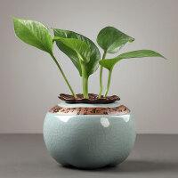 桌面装饰摆件创意绿萝水培花瓶器皿鲜花插花瓶子水养植物花盆容器