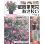 庭院蔷薇花栽培技巧
