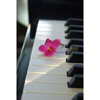 【预订】Pink Flower on the Piano Keys Music Journal: 150 Page L