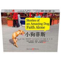 小狗菲斯(Faith(菲斯)(一条感动全世界的狗!)