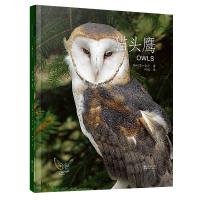 动物小百科:猫头鹰