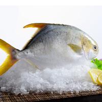 [当当自营] 金鲳鱼两条装 700g