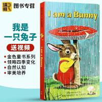 I am a Bunny英文绘本 我是一只兔子英文原版绘本 儿童0-3岁幼儿宝宝英语启蒙纸板书 可搭饥饿的毛毛虫棕色的