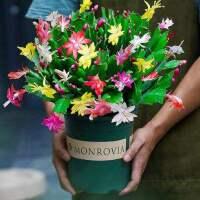 新款嫁接兰花苗蟹爪莲带花多色盆栽绿植物室内花四季好养花卉包邮