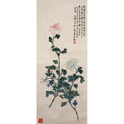 R186何香凝菊花