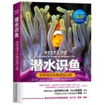 潜水识鱼:热带海洋生物发现之旅