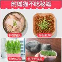 猫子水培猫薄荷猫零食除毛球化毛膏猫草种籽种植套装猫咪用品
