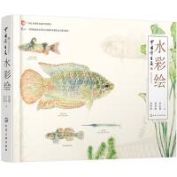 中国原生鱼水彩绘