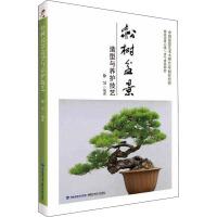 松树盆景造型与养护技艺 福建科学技术出版社