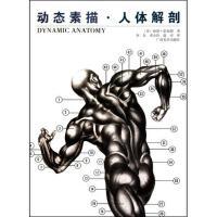 动态素描人体解剖