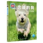 什么是什么・珍藏版(第3辑):忠诚的狗