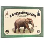 动物大百科·大小能目测的野生动物