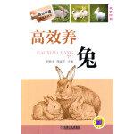 高效养兔(高效养殖致富直通车)