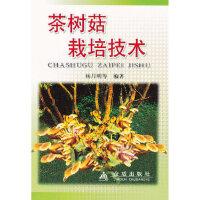 茶树菇栽培技术