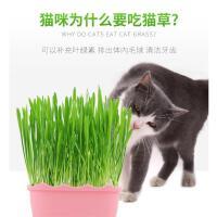 猫草种子水培猫薄荷猫零食除毛球化毛膏猫草种籽盆栽套装猫咪用品