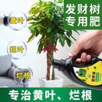 新款发财树专用肥盆栽营养液幸福树花肥料金钱树水培植物通用室内