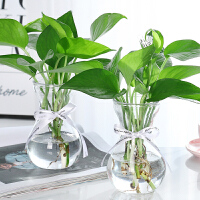 透明风信子水养绿萝插花瓶摆件桌面创意简约水培植物玻璃花瓶花盆