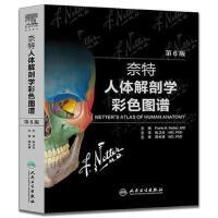 奈特人体解剖学彩色图谱(翻译版)