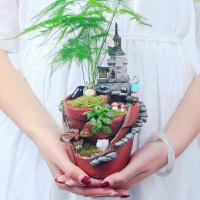 多肉植物花盆创意苔藓微景观空中花园微缩盆景diy小盆栽摆件礼物
