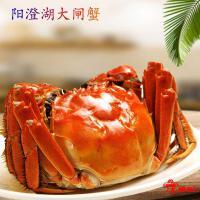 阳澄湖大闸蟹母蟹-2两