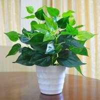 绿萝假植物室内外装饰塑料小盆栽田园仿真花草假绿萝摆设仿真绿植