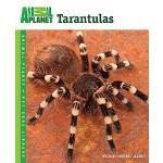【预订】Tarantulas